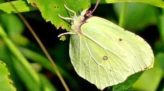 Perhosia Suomen luonnossa