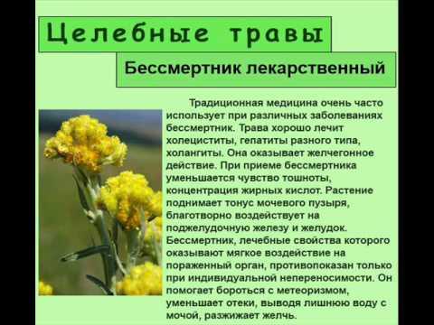 Чистотела трава: противовоспалительное средство растительного происхождения. Сравнить цены / купить. Торговое название: чистотела трава.