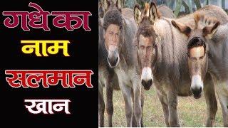 19 oct | गधे का नाम सलमान खान | bollywood news | treandingnews | actorce news |