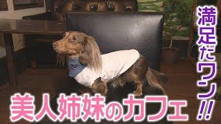 秋田市の姉妹が経営するドッグカフェを紹介。ランチやパンケーキが人気...