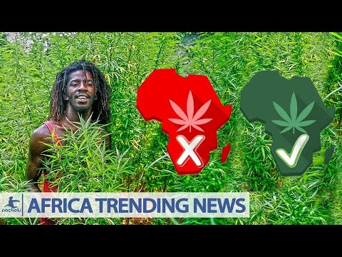 Zimbabwe Legalizes Marijuana Starting an African Weed Race