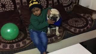 pug and Kid playing