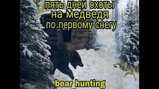 Пять дней охоты на медведя по первому снегу