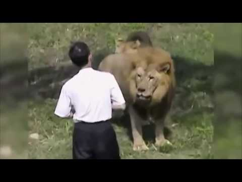 When Zoo Animals Attack Compilation Part 1