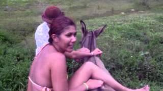Repeat youtube video Cuidado com o burro!