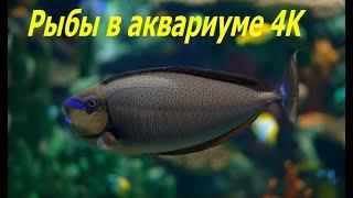 Рыбы в аквариуме 4K