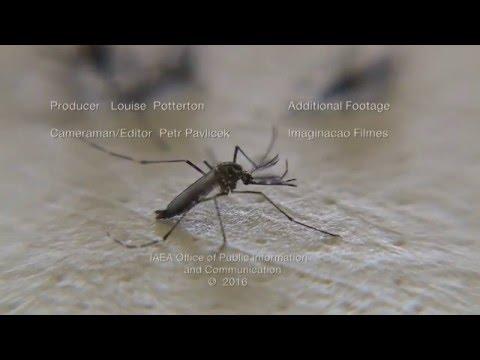 Zika Crisis – The IAEA Responds