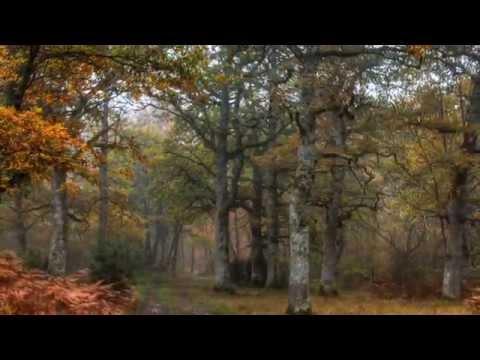 Navarra 006 Valle de la Ultzama Bosque de Orgi en Otoño