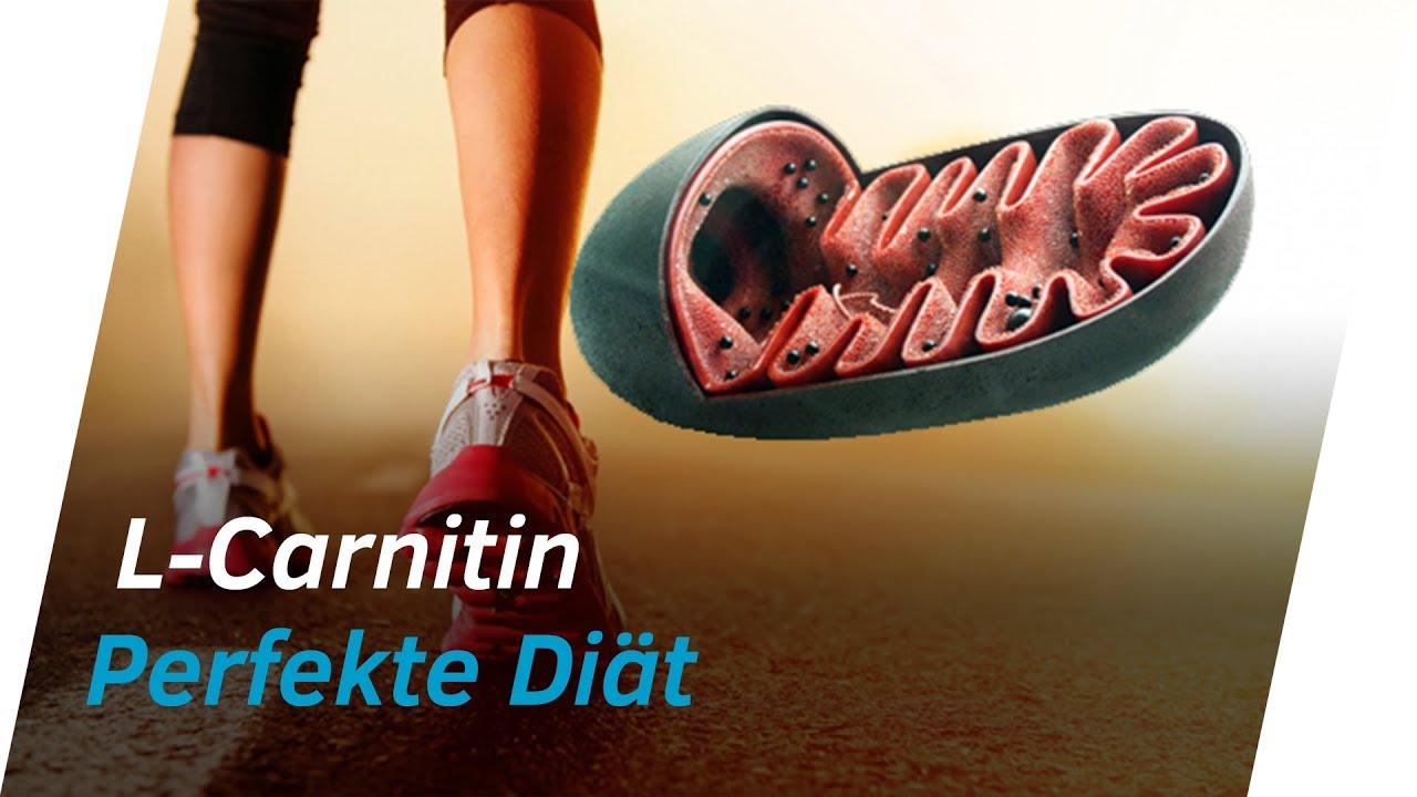 L-Carnitin Wirkung Körper