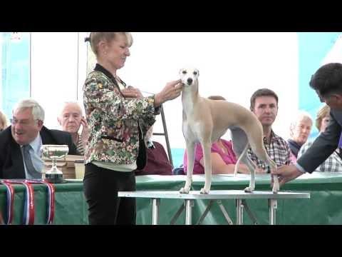 Windsor Championship Dog Show 2013 - Hound group
