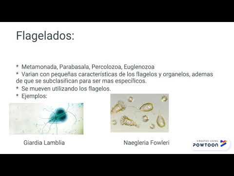 parasitología ejemplos