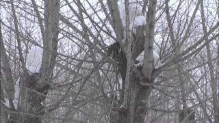 видео Удаление сосулек и чистка снега с крыш в Симферополе
