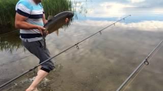 Рыбалка на амура озеро Шейно.(Ловим на бойлы и флет фидер. Ловим и отпускаем., 2016-06-26T18:42:28.000Z)