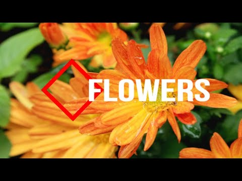 Flowers and rain in the Flowers garden with calm music