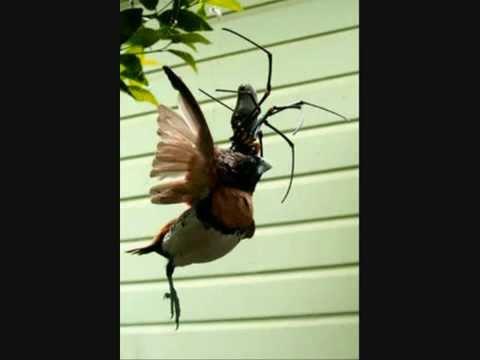 Spider Eats Bird - YouTube