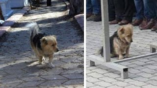 Hund läuft jeden Tag nach dem Tod des Besitzers davon - Eines Tages folgte ihm der Sohn!