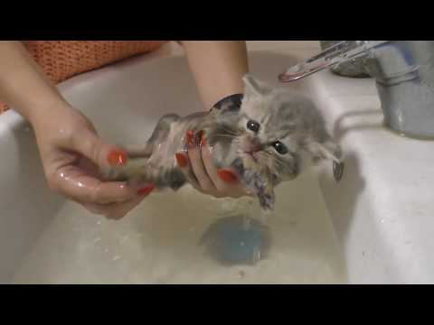 First bath for street kitten / rescue in our life