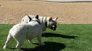 Bullet and Olive - Feb '19 windy day & play