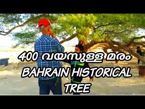 BAHRAIN TRAVEL VLOGE-4 TREE OF LIFE BAHRAIN ട്രീ ഓഫ് ലൈഫ് ബഹറിൻ