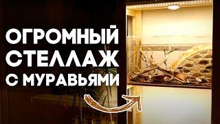 ОБЗОР МОЕЙ КОЛЛЕКЦИИ МУРАВЬЁВ - ПОЛНЫЙ обзор ВСЕХ ВИДОВ муравьёв которые живут у меня! Ant room tour