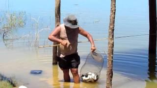 Caroço Barriguinha pescando Lambari Aç...