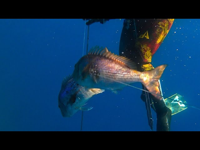 😲TOP Moment Spearfishing - The Double Shot |Spearfishing Life 🇬🇷