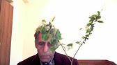 24 июн 2013. Описание дерева осина обыкновенная. Кора осины от паразитов. Настойка из осиновых почек рекомендована при лечении.