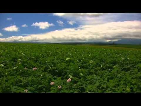 北海道 日本 Wonderful Chill Out Music   Hokkaido Summer Japan HD