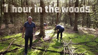 ONE HOUR IN THE WOODS - woodland photography - landscape photography
