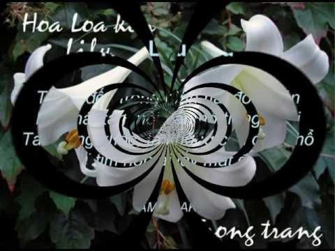Ý Nghĩa và các vần thơ nói về các loại Hoa