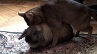 Кот и кролик и их сложные взаимоотношения :)