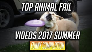 Top Animal Fail Videos 2017 Summer -Funny Compilation