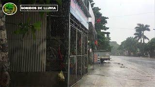 Lluvia Relajante para Dormir ⚡ 11 Horas - Tormenta Fuerte - Relax Lluvia y Truenos - Rain Storm ⚡