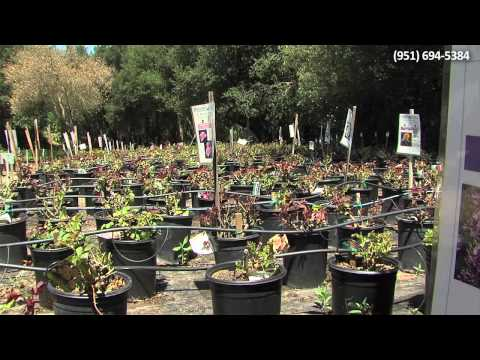 """""""How We DO"""" Marketing Video: McCabe's Nursery and Landscape Construction"""