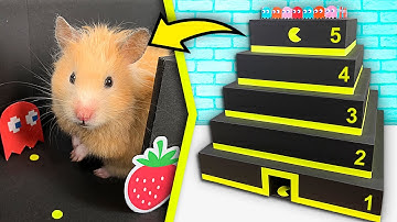 Hamster Pac-Man Pyramid Maze | Cardboard obstacle course