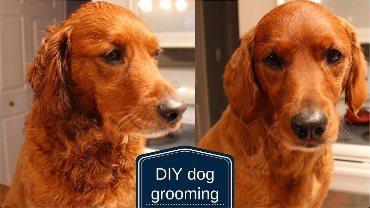 Diy Dog Grooming How To Cut Your Dog S Hair At Home Veronica