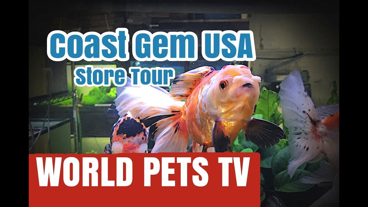 Coast Gem USA Goldfish Store Tour
