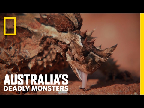 Australia's Top 3 Desert Monsters | Australia's Deadly Monsters
