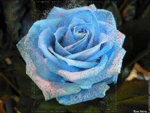Mignonne allons voir si la rose   Pierre de Ronsard