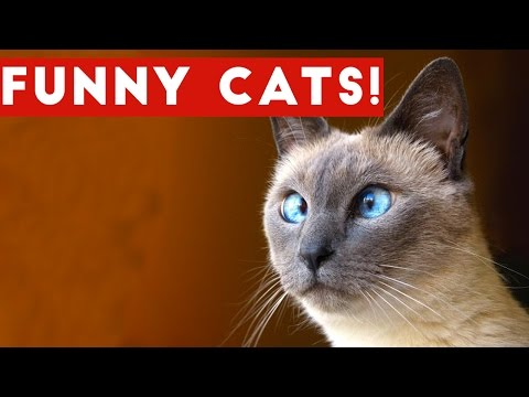 Thumbnail: Funny Cats Compilation 2017 | Best Funny Cat Videos Ever