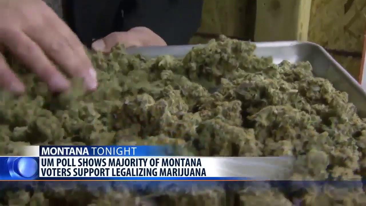 UM poll shows majority of MT voters support legalizing marijuana