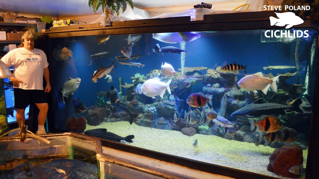 Big home aquarium