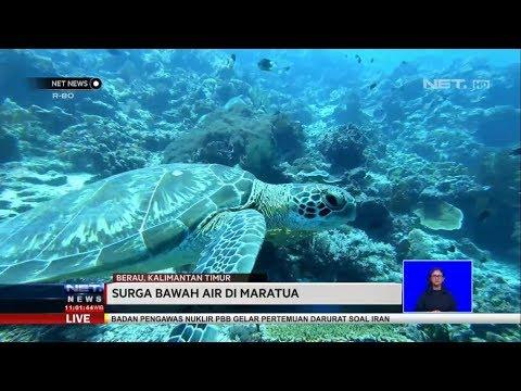 Surga Bawah Air Di Maratua - NET NEWS