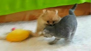 Кот против Собаки. Puppy and kitten