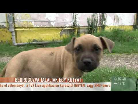 Érzelemmentesen reagált a várpalotai tini az állatkínzás vádjára - tv2humokka