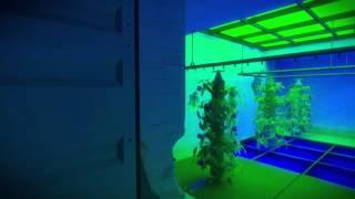 The Witness Walkthrough: Bunker laser activation Pt. 2 (Greenhouse Flower building)