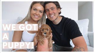 WE GOT A PUPPY!   Meet Honey Our Cavoodle!