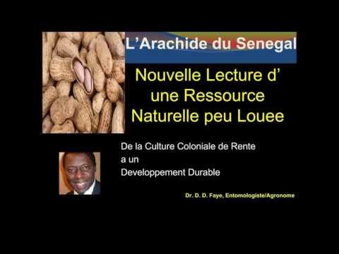 PIKINE DIASPORA RADIO 5 JUIN 2016 L'arachide au Senegal nouvelle lecture d'une ressource peulouee av