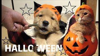 猫と犬 Halloween