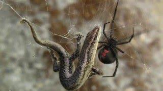 10 Животных Австралии которые могут вас убить